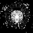 tigers_transp